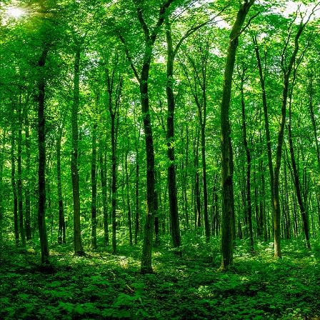 E-Learning Membangun Pengelolaan Hutan Berintegritas